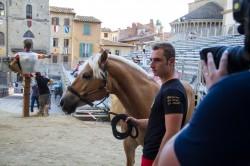 Prove e Bollatura Cavalli 20 giugno